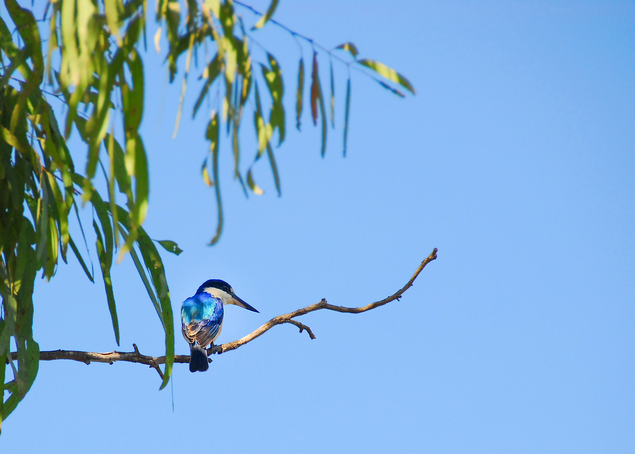 Cape York-wildlife4.jpg