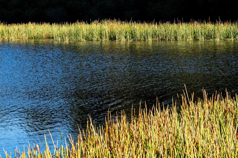 LONR - DunnsSwamp-12.jpg
