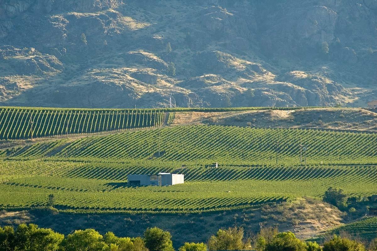 Blackhills_winery.jpeg