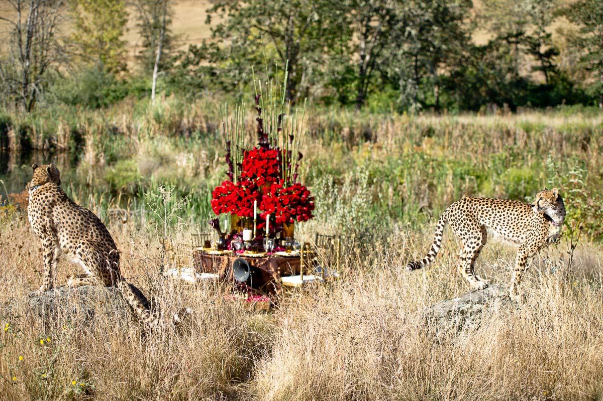 0000-cheetah-moscastudio-the-perfect-occasion-grace-ormonde-wedding-style-editorial-20160825-NOlogo.jpg