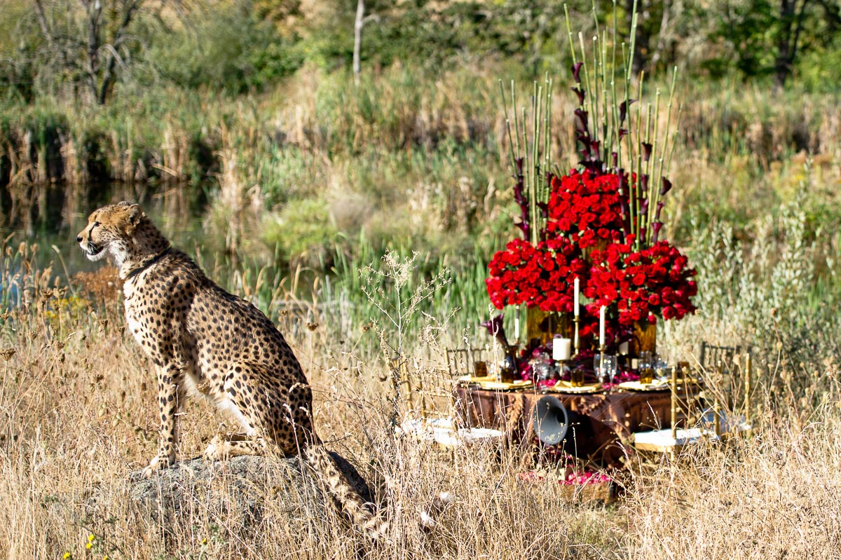 0001-cheetah-moscastudio-the-perfect-occasion-grace-ormonde-wedding-style-editorial-20160825-NOlogo.jpg