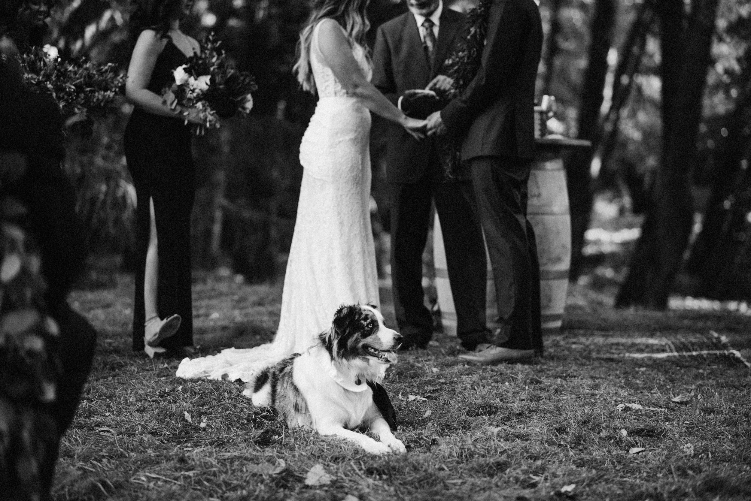 goldbeck wedding-706.jpg