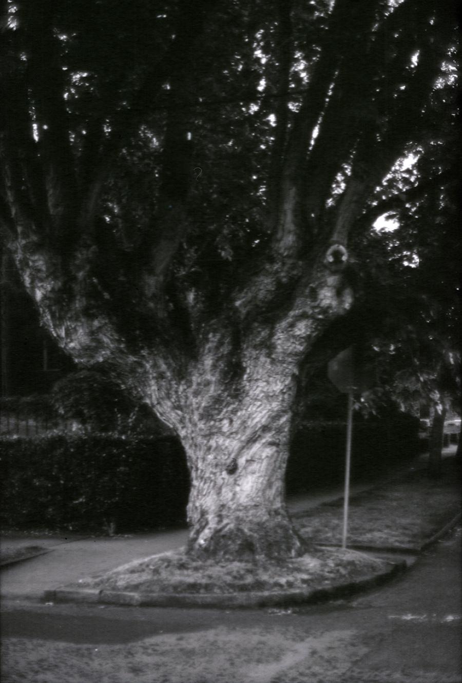 pdx-hancocktree_mattschu_insta.jpg