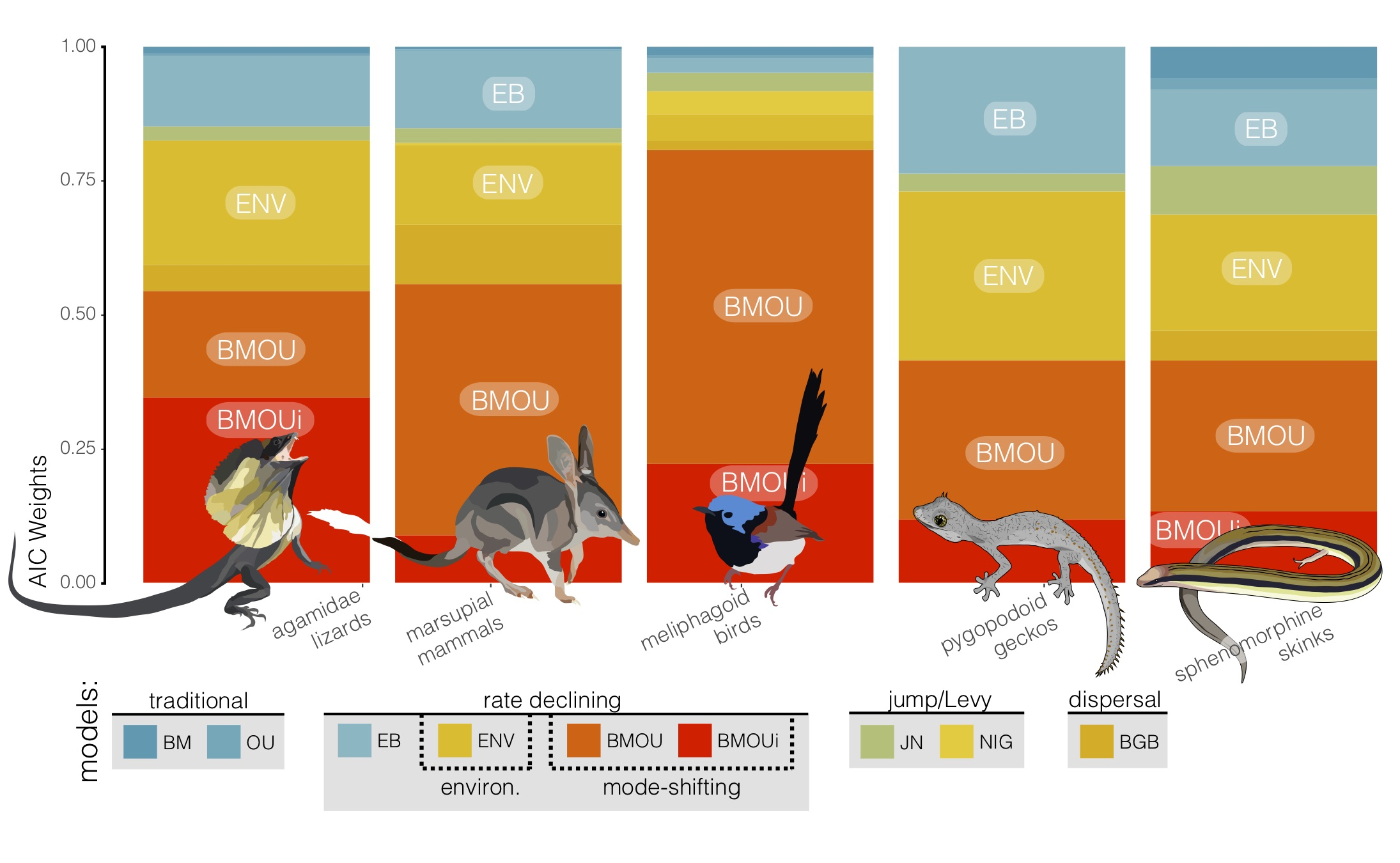 Tempo + Mode of Size Evolution - (2018). Brennan, I.G., Keogh, J.S.Miocene biome turnover constrained body size evolution across multiple radiations of Australian vertebrates.Proceedings of the Royal Society B: Biological Sciences 285: 20181474. Link or Download.