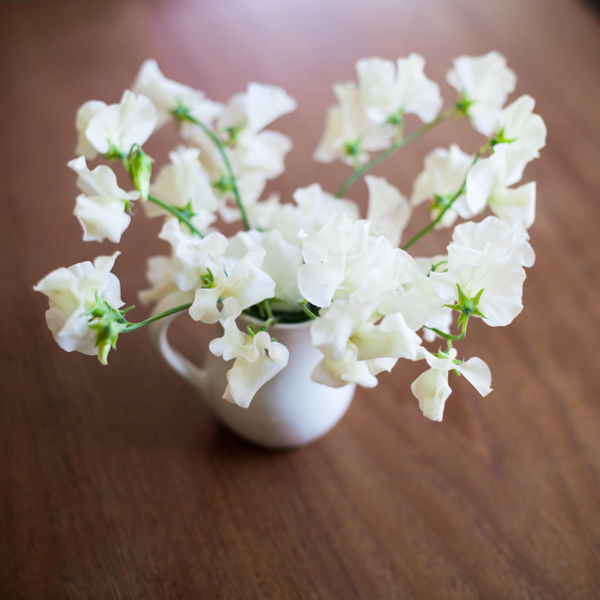 white-sweet-peas-in-small-jug-june-flowers