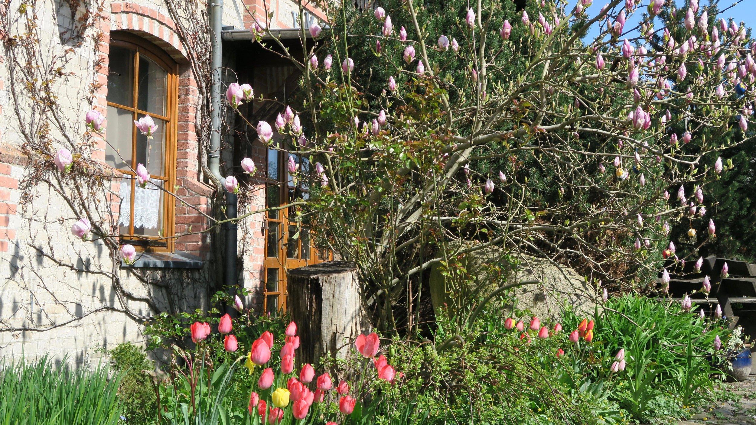 Urlaub Ostsee Pension Schmelzer Galerie 26 Ostern, Blumen, Frühling.jpg