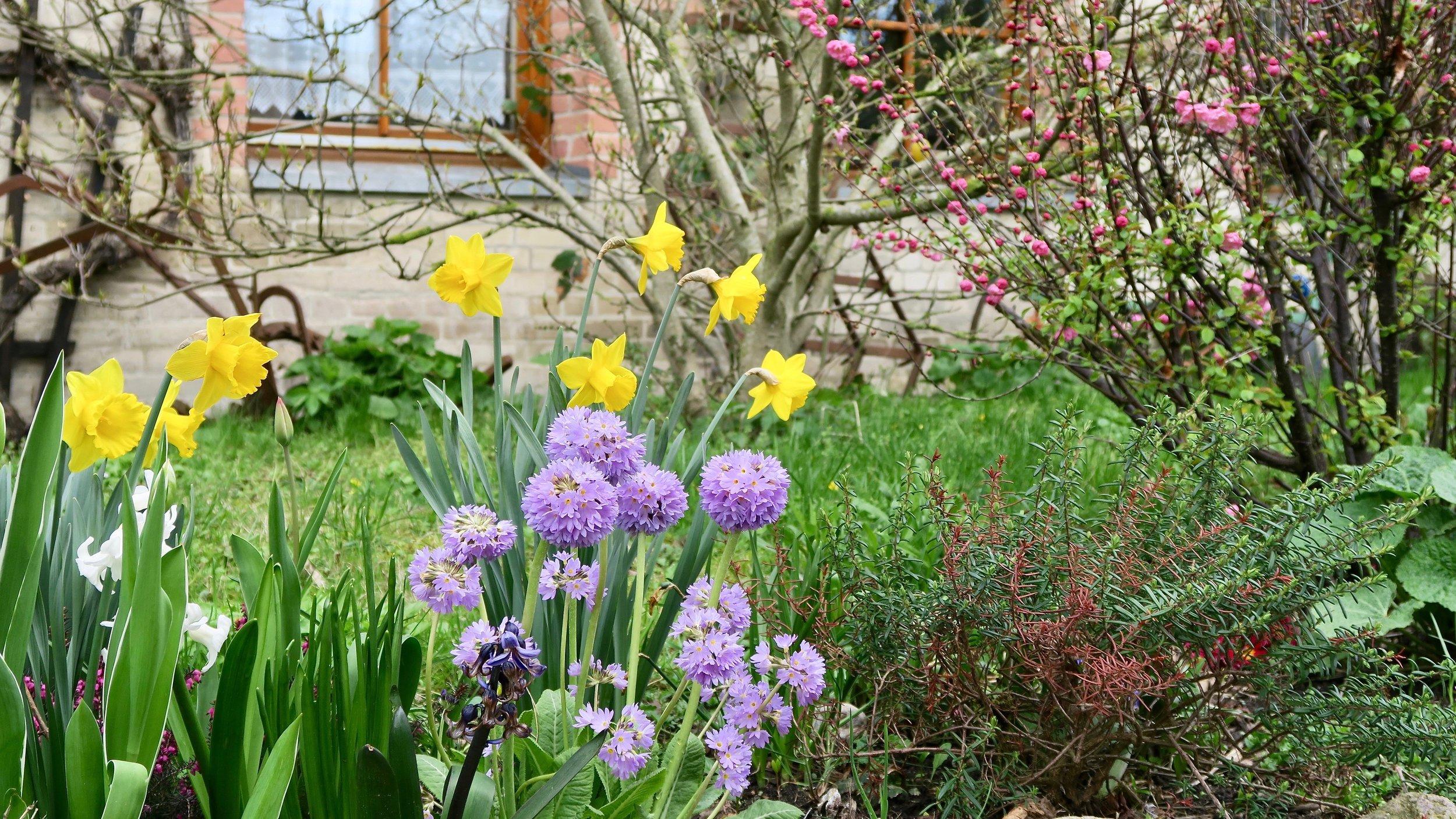 Urlaub Ostsee Pension Schmelzer Galerie 33 Blumen, Ostern.jpg