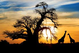 Africa-1.jpg