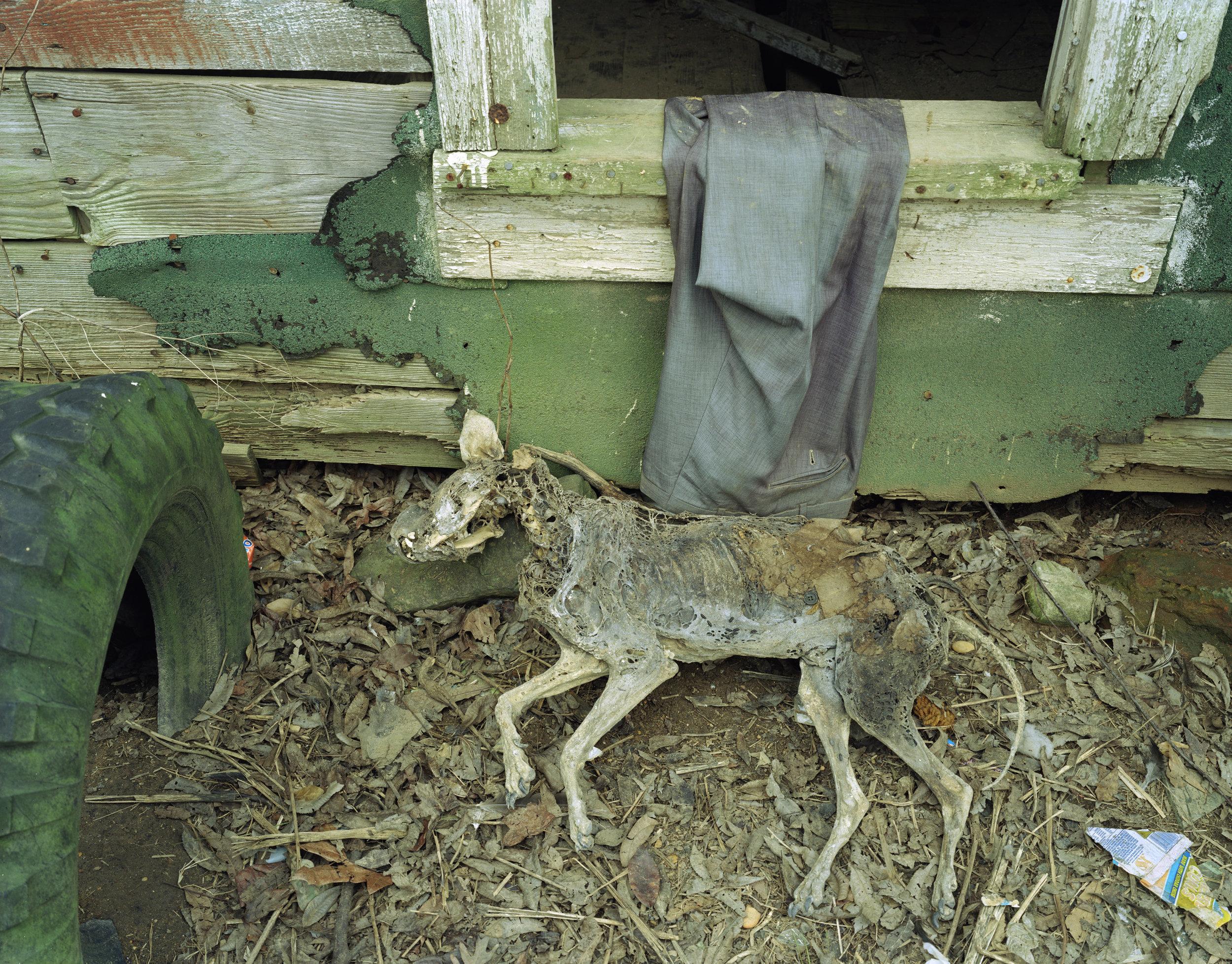 Dead Dog at Shepard's Shack