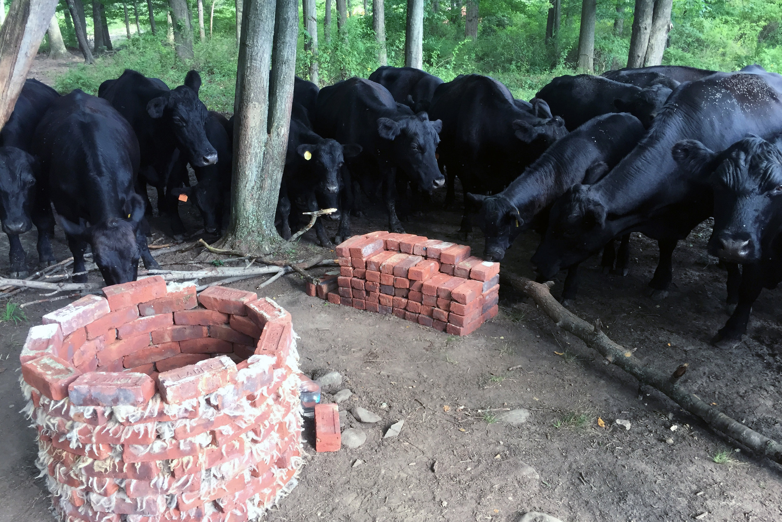 30_brick_cows.JPG