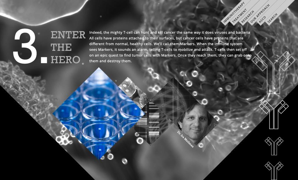 immuno03.jpg