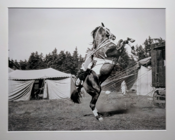 """An unidentified performer with the Al G. Barnes Circus demonstrates her skills on horseback during one of the circus's stops in Portland. The Barnes circus performed regularly in Portland and throughout the Pacific Northwest."""