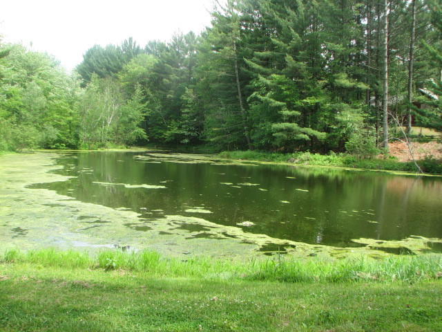 Private Fishing Pond (Limited Access)