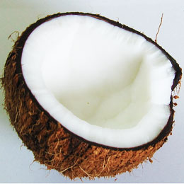 coconut-thumb
