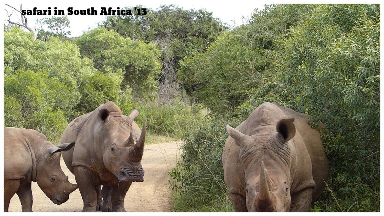 south-africa-rhinos.jpg