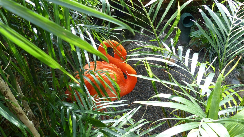 flamingo-key-west-fl.JPG