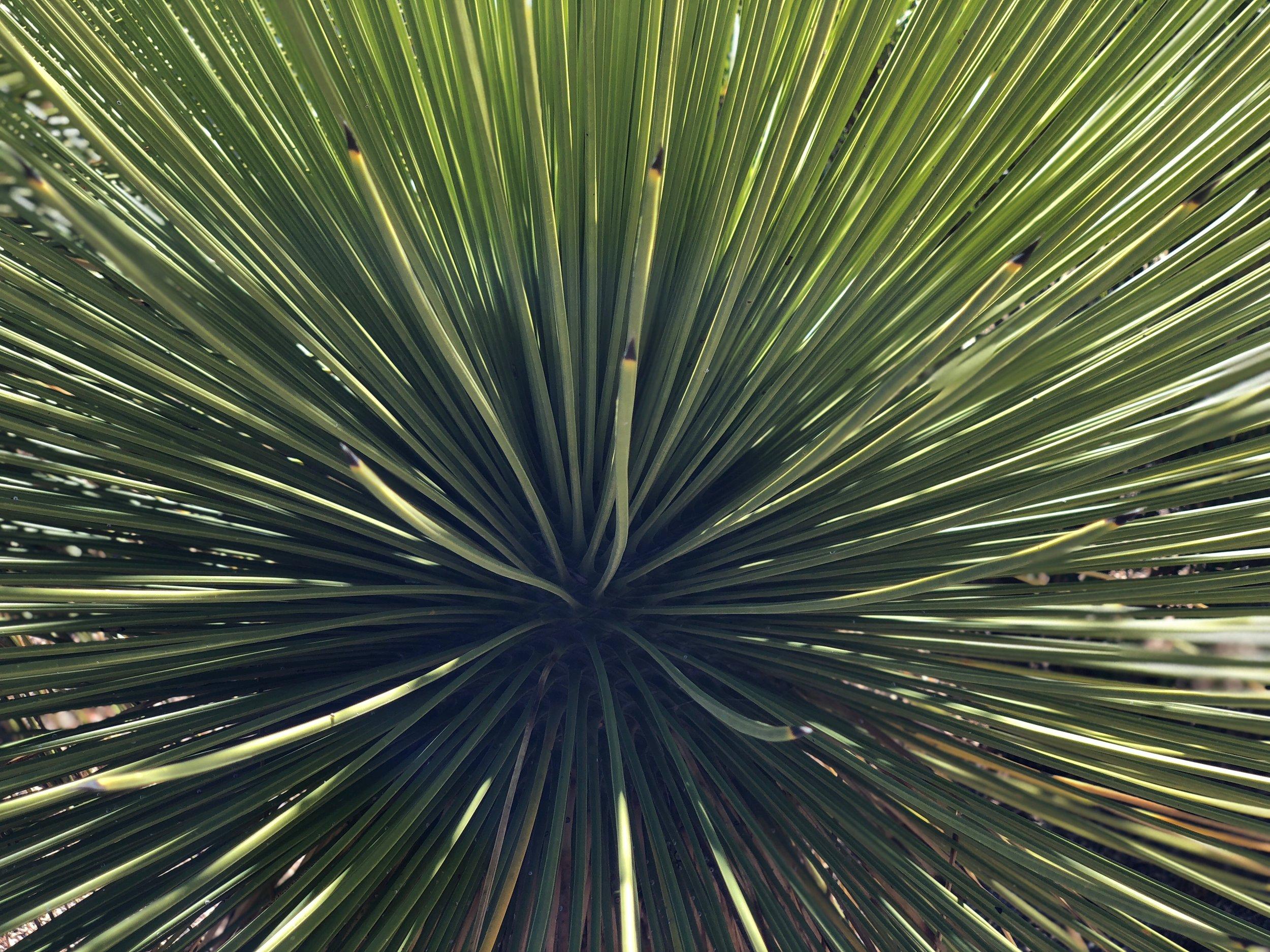 green-plant-mexico.jpg