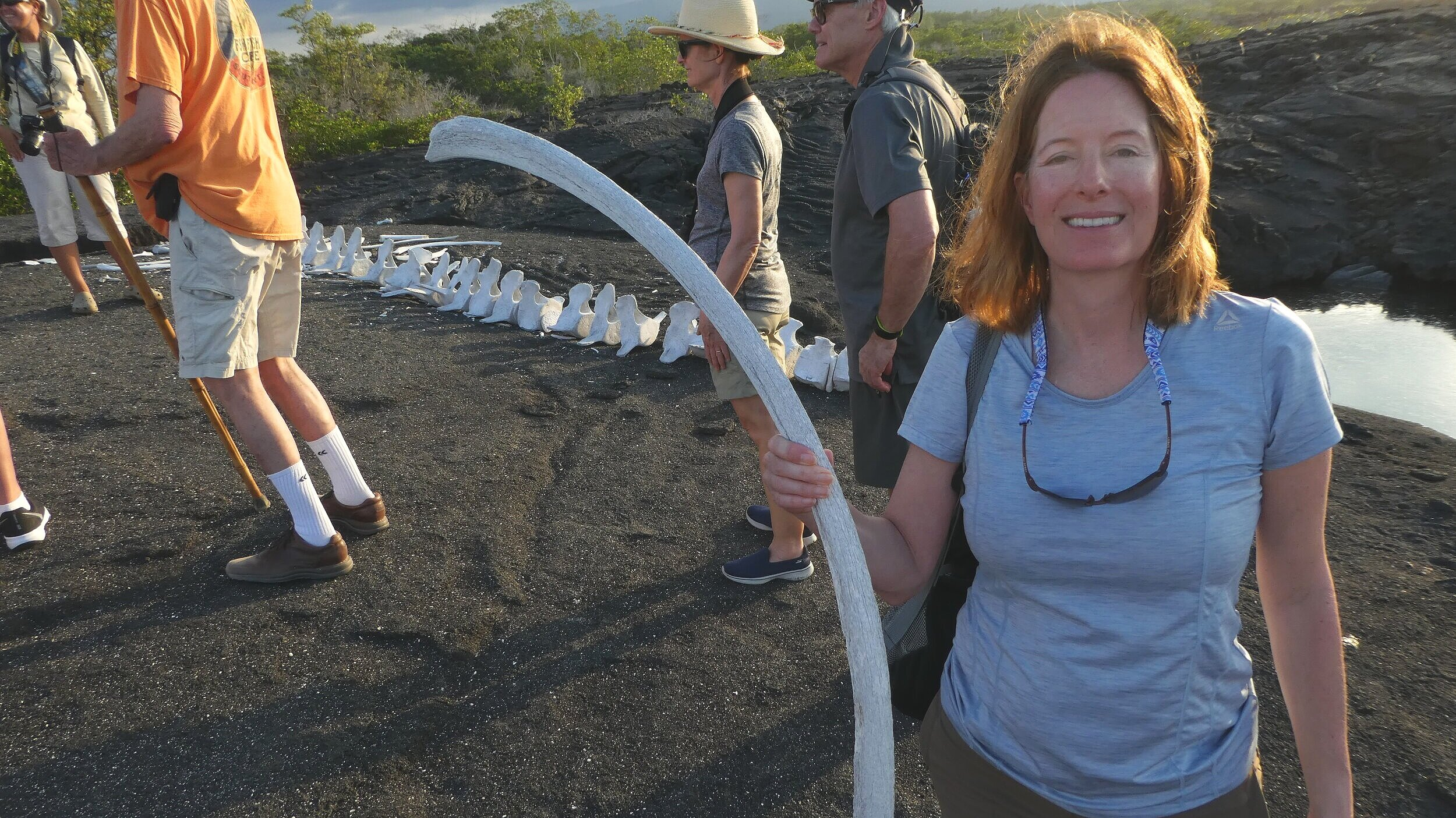 Whale skeleton found on Isabela.