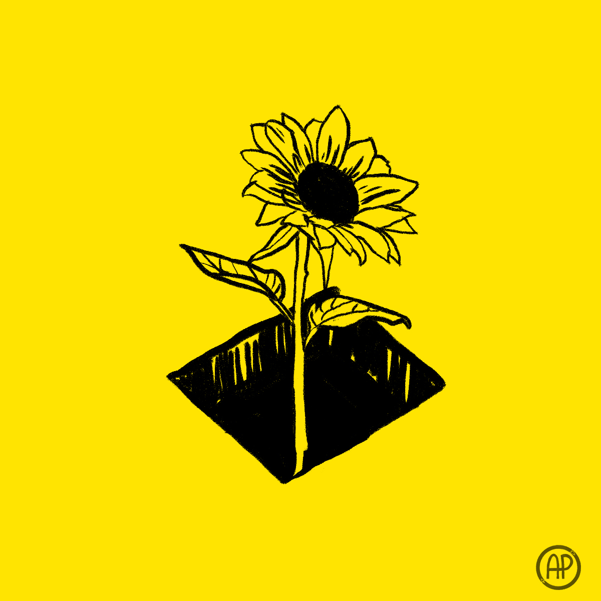 sunflower in the dark.jpg