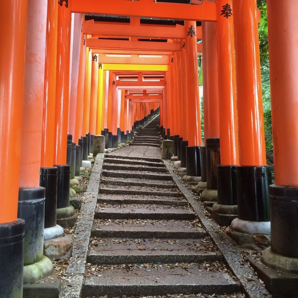 Southern Areas:  Inari, Uji and Wazuka   Take a quick train to Fushimi Inari Taisha 伏見稲荷大社 and hike the hill through 30,000 red torii gates.  Then continue south to Uji 宇治, Japan's tea capital, and home to the country's oldest operating shrine Shinto shrine.  Ambitious tea lovers can further immerse themselves in a sea of green in the Wazuka 和束 tea plantations farther south.