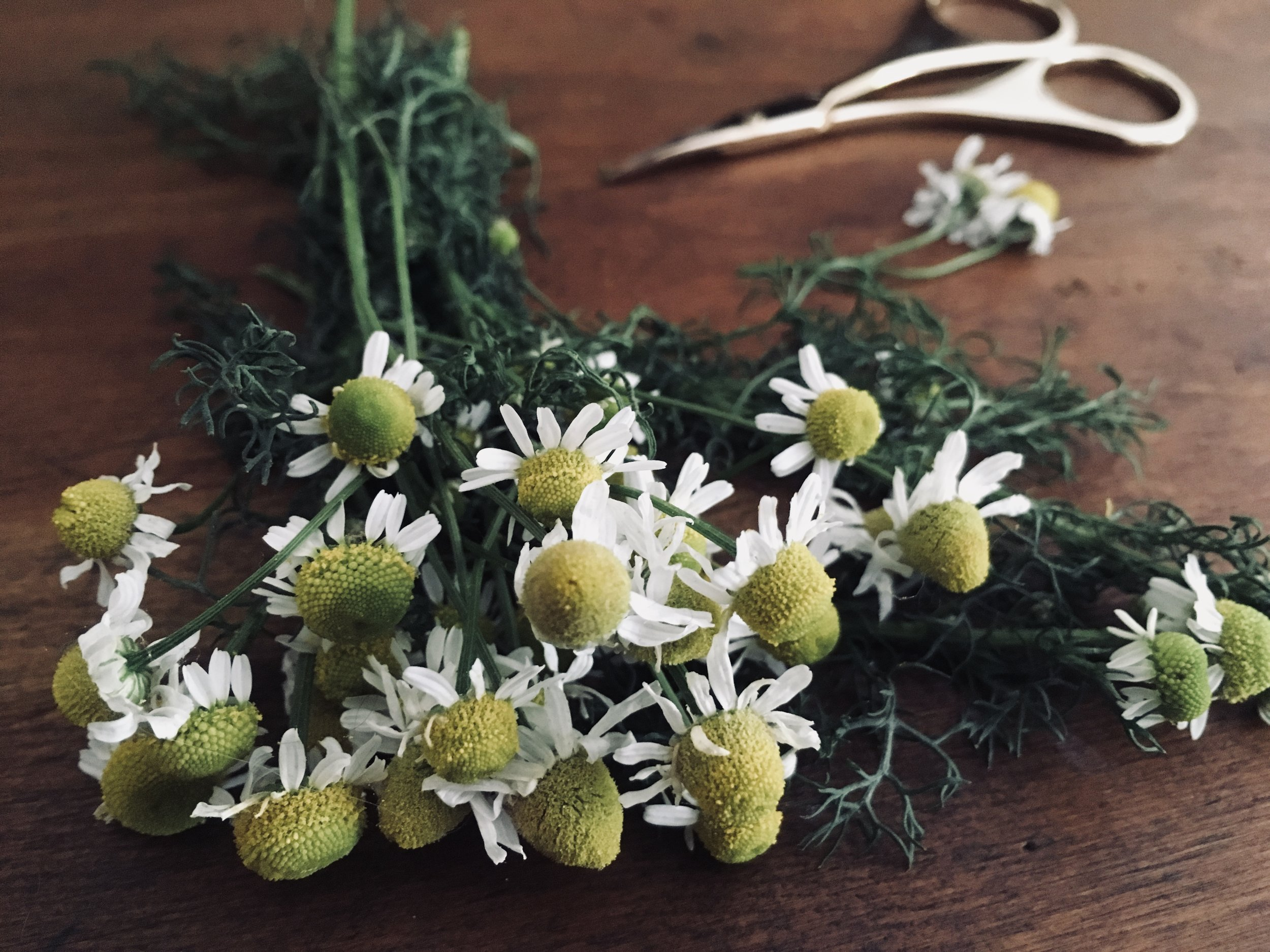 claire-beauchamp-outlander-cocktail-chamomile.jpg