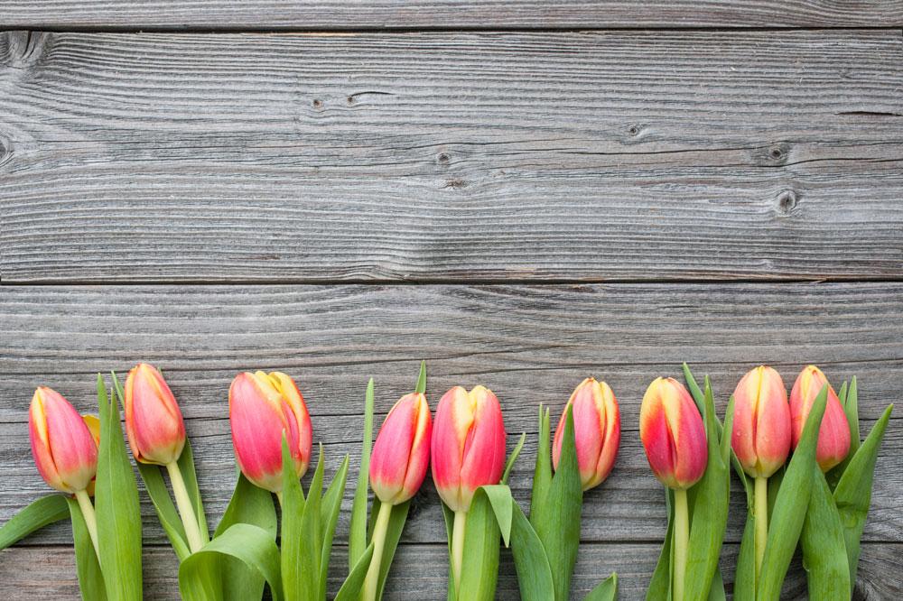 stock-photo-46617630-fresh-tulips-arranged-on-old-wooden-backgroun.jpg