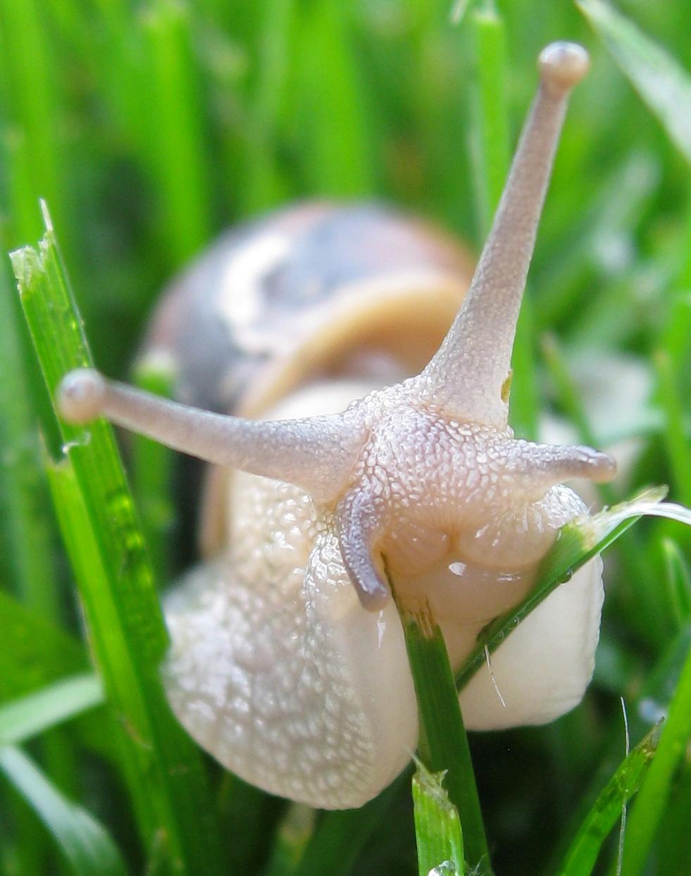 Snail Portrait.jpg