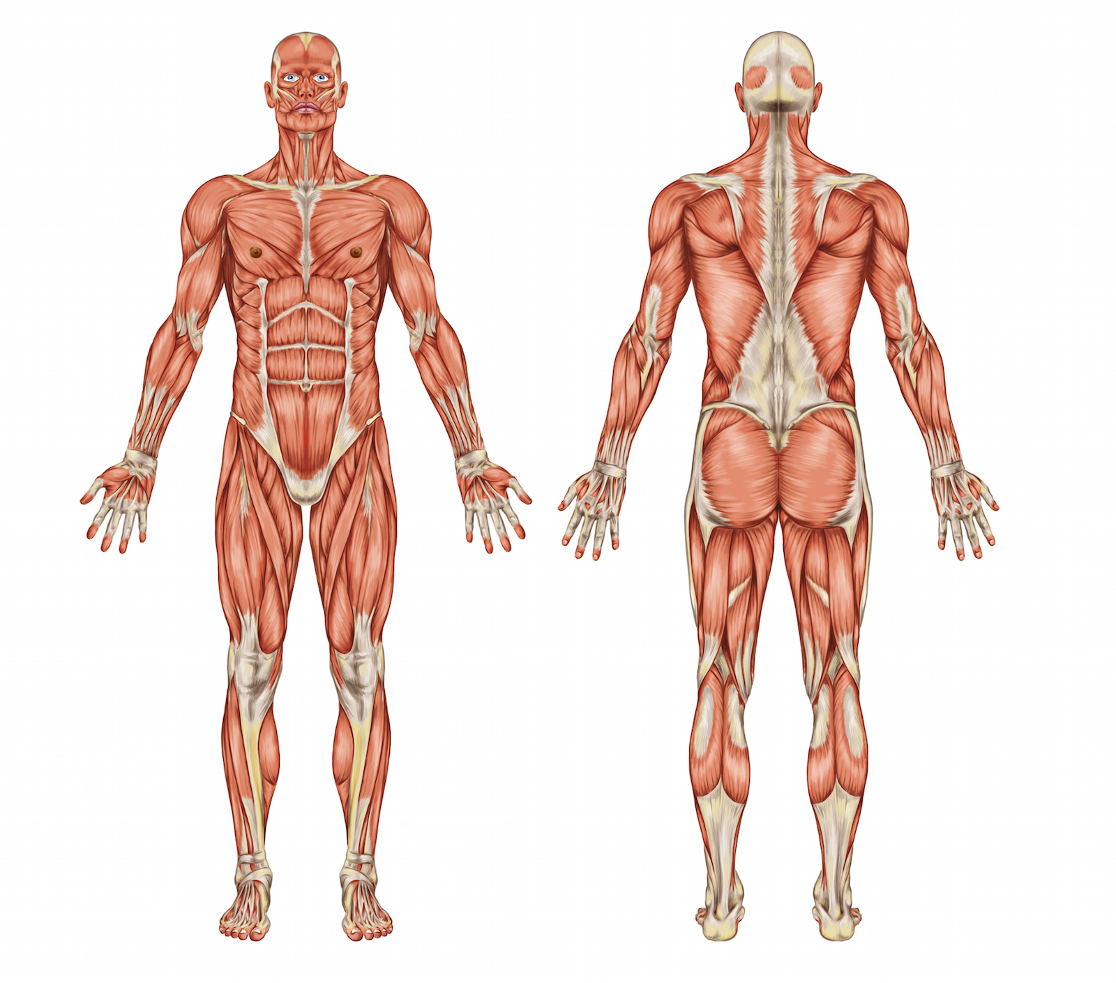la technique Bowen soulage le corps et les muscles
