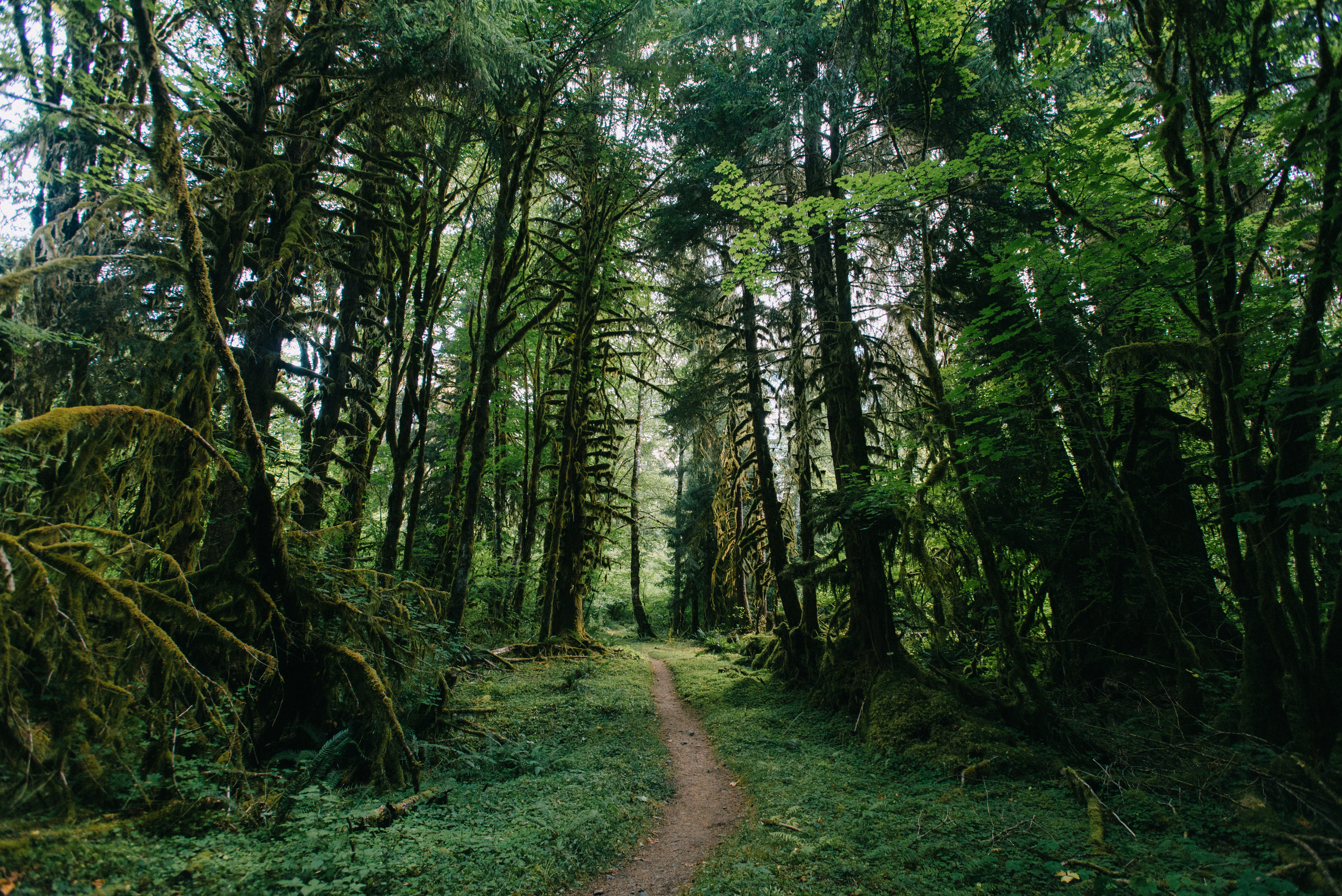 I spent 3 days alone in the HOH Rainforest and walked 37 miles in and out to Blue Glacier, August 2015