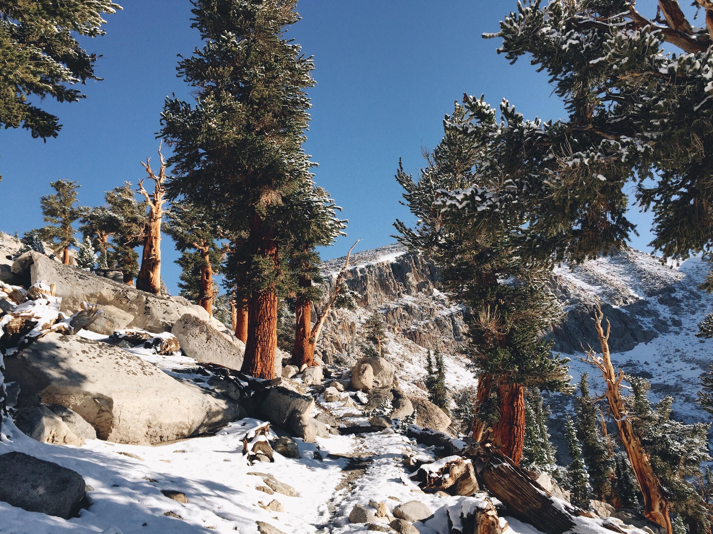 Soooo pretty. All the trees.