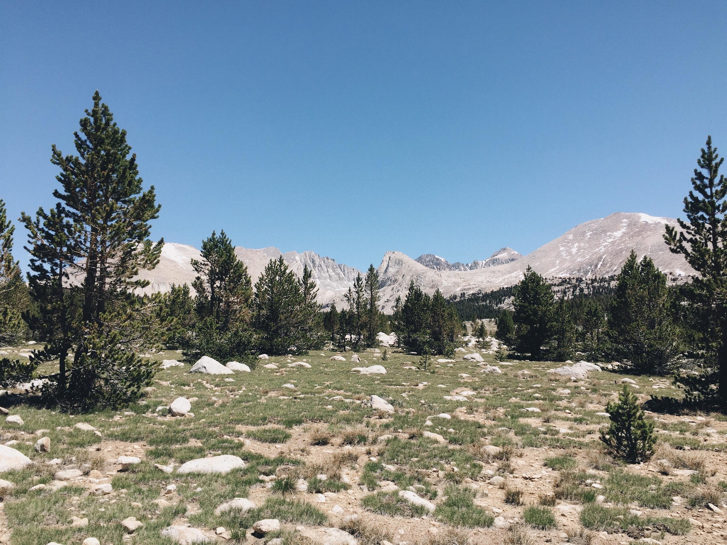 Pretty meadow views.
