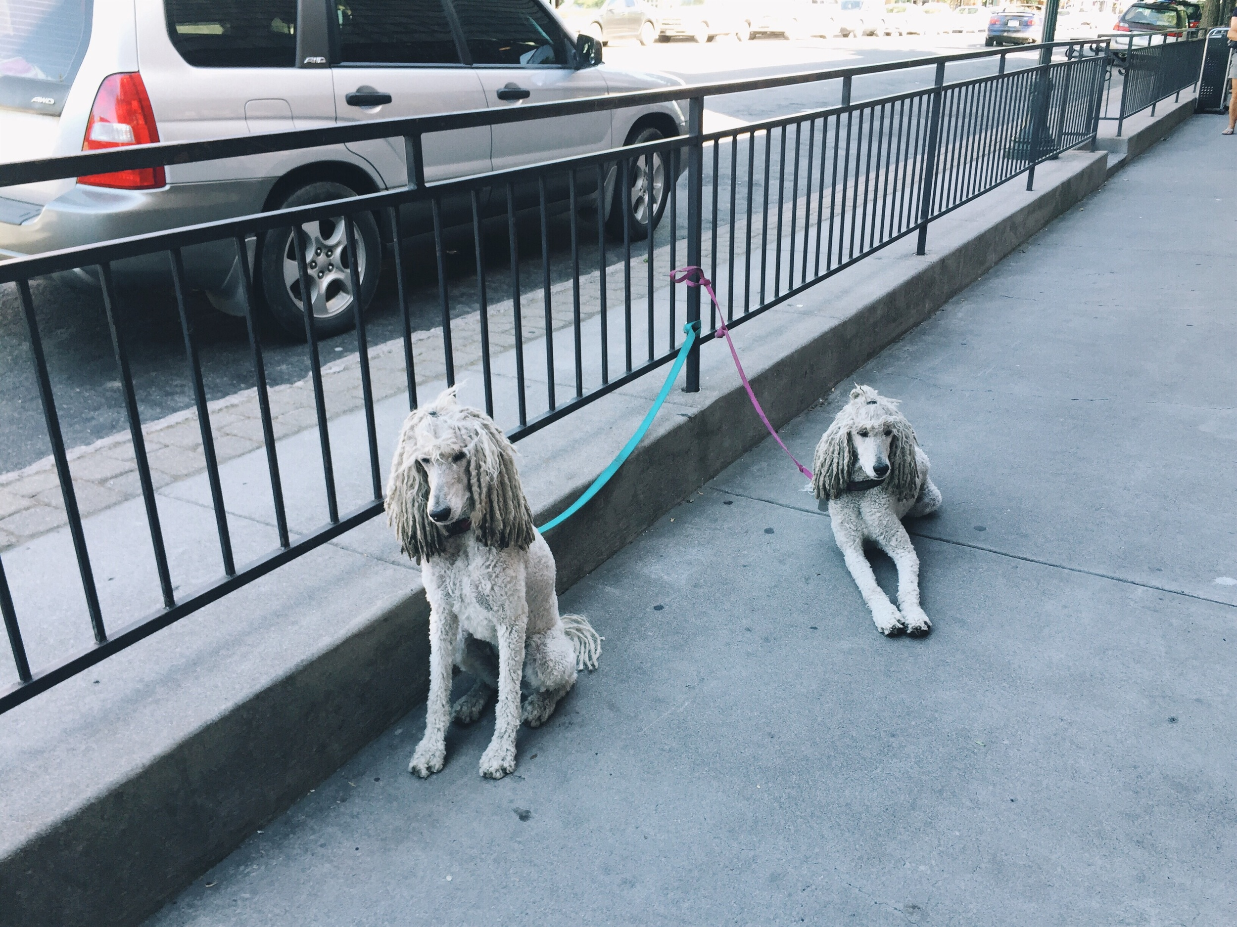 Some cute dogs outside the coffee shop.