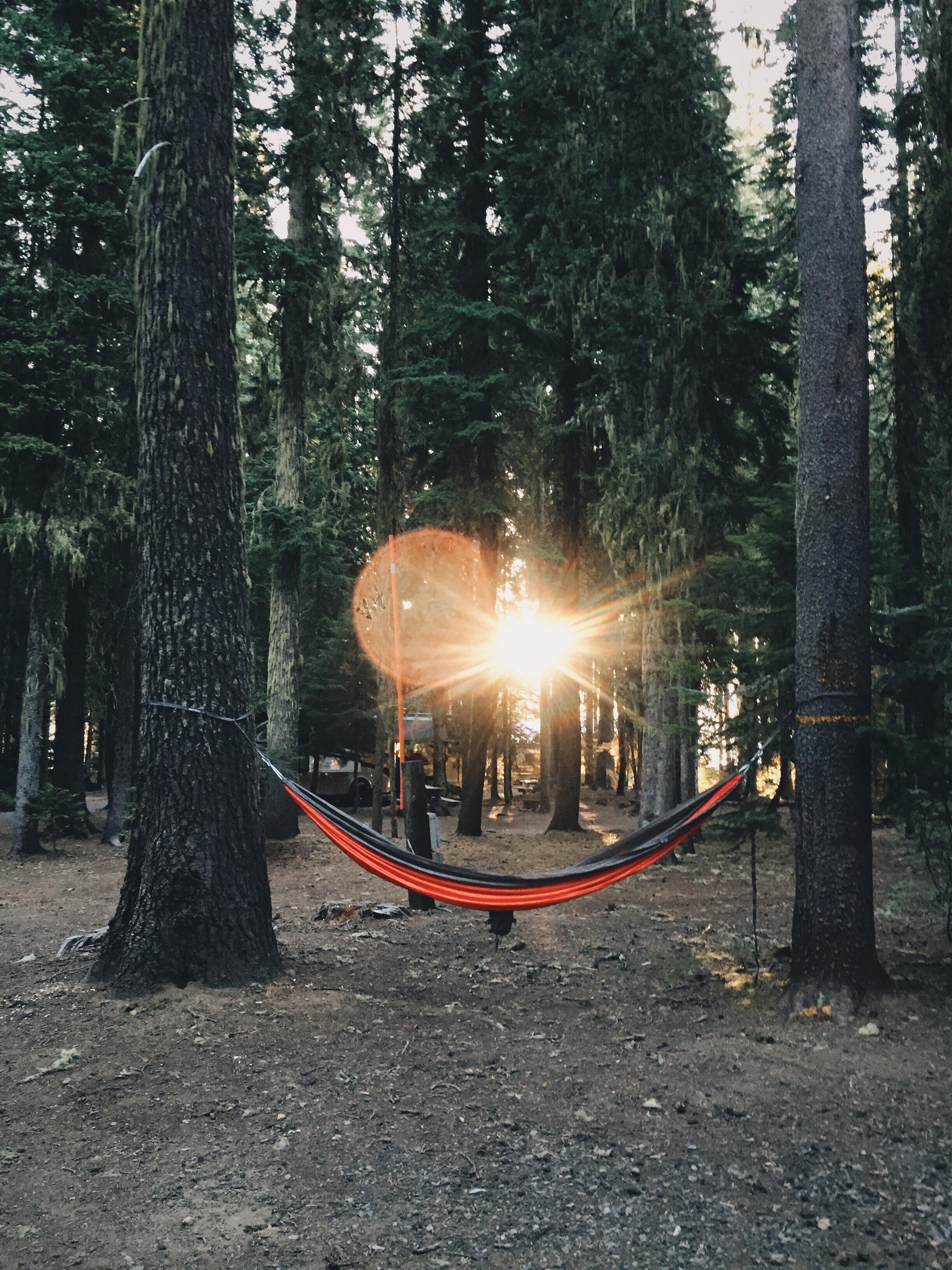 Jennys hammock.