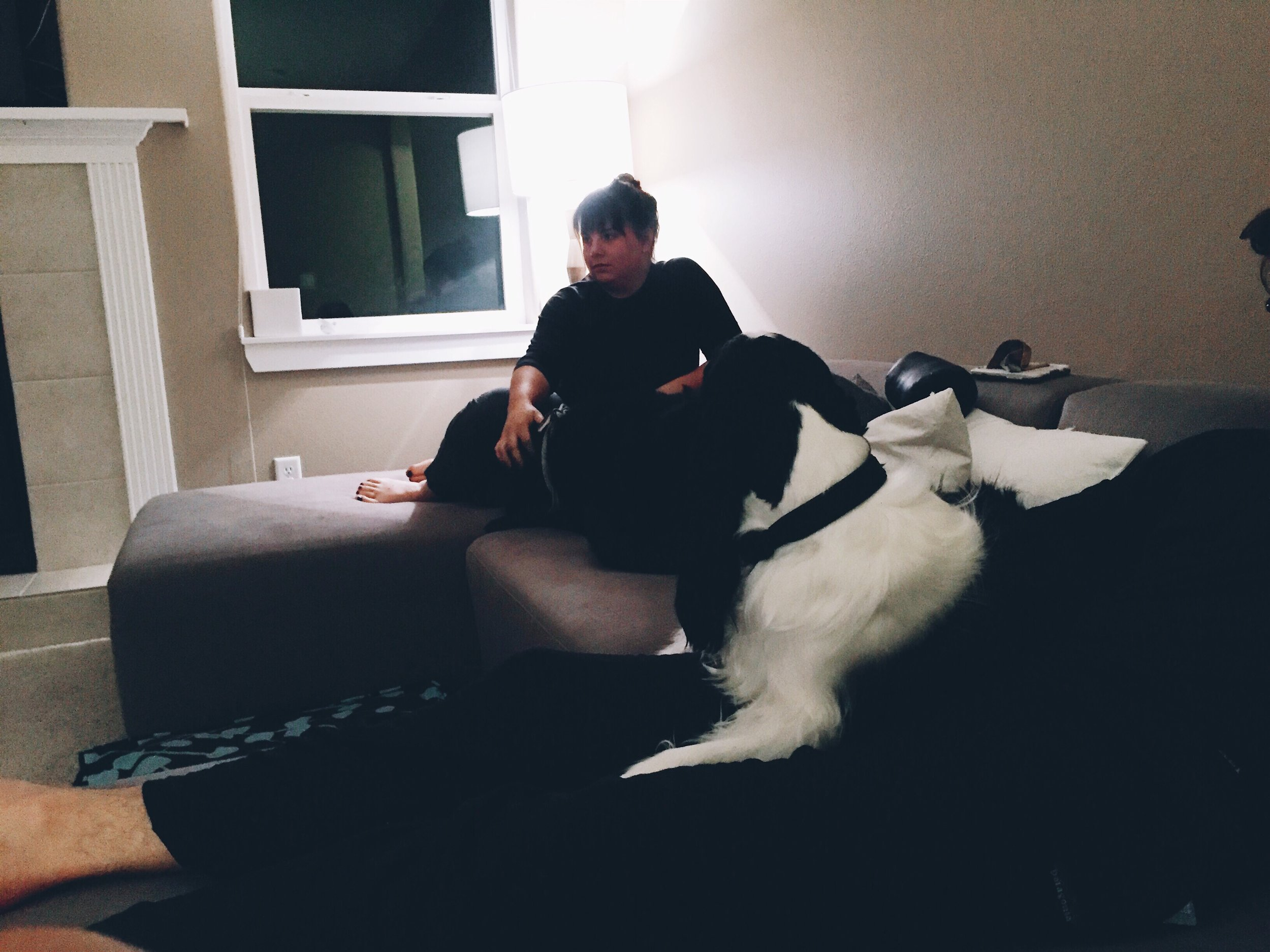 Chill w dogs.