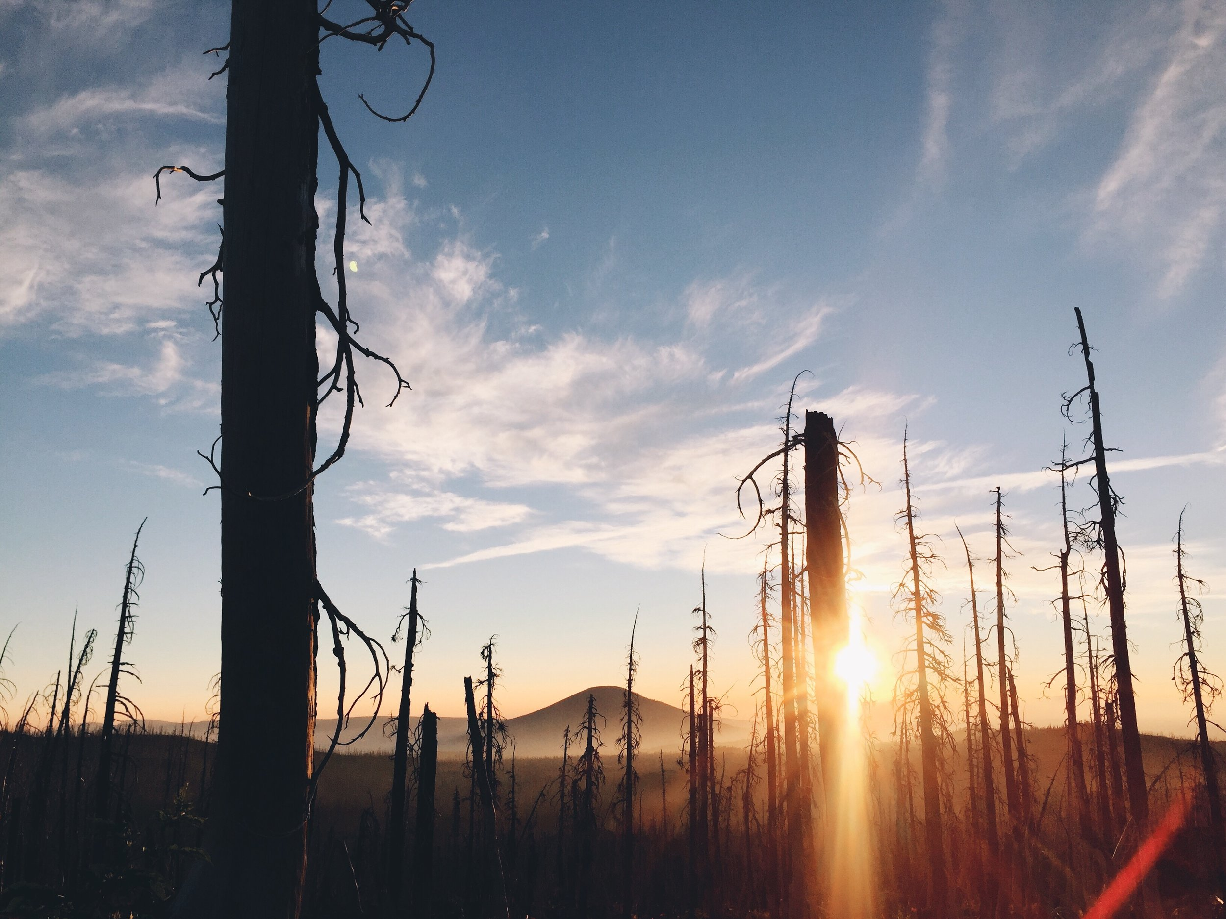 Sun coming out behind the burned trees