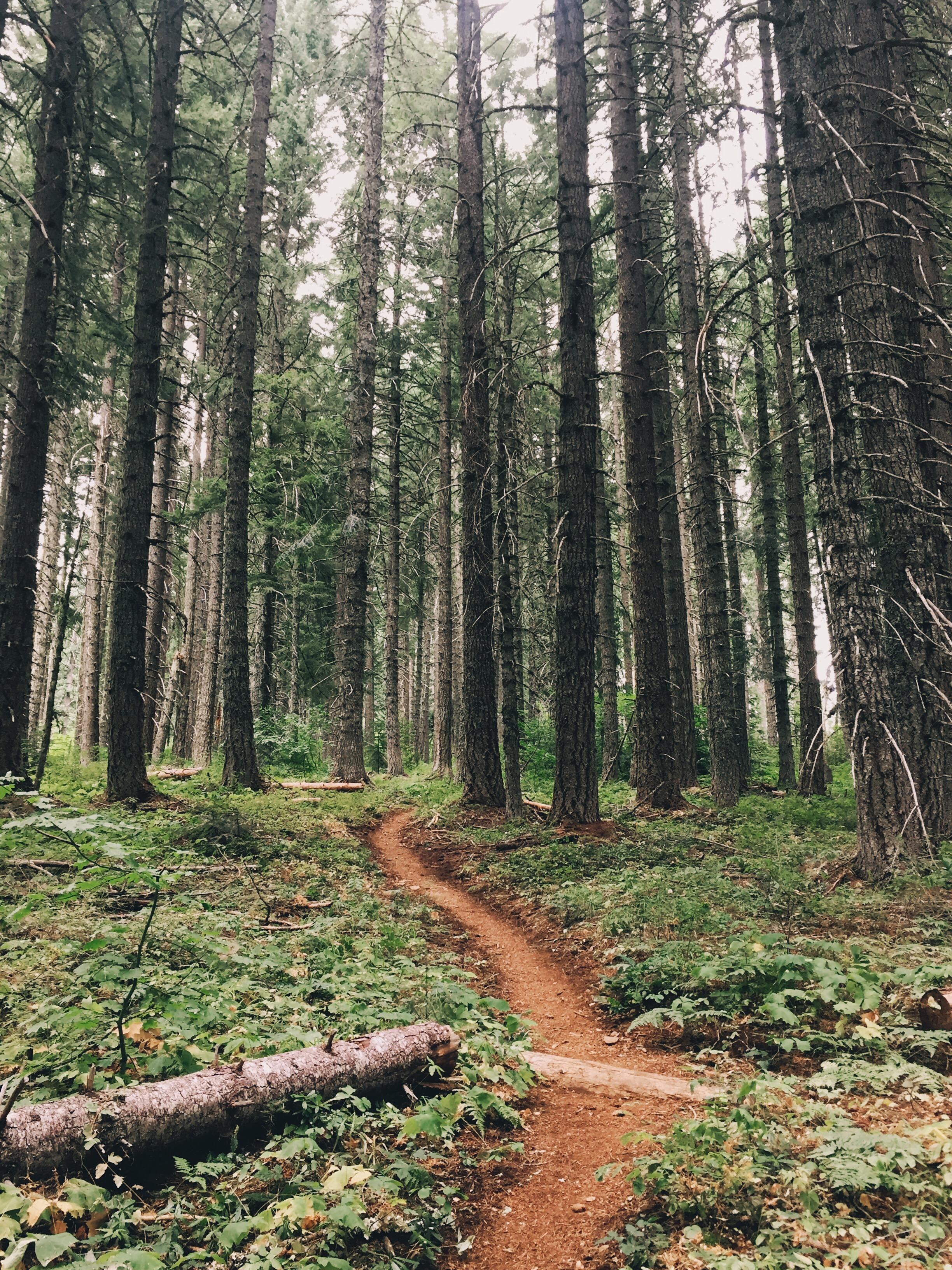 Deep dense forest