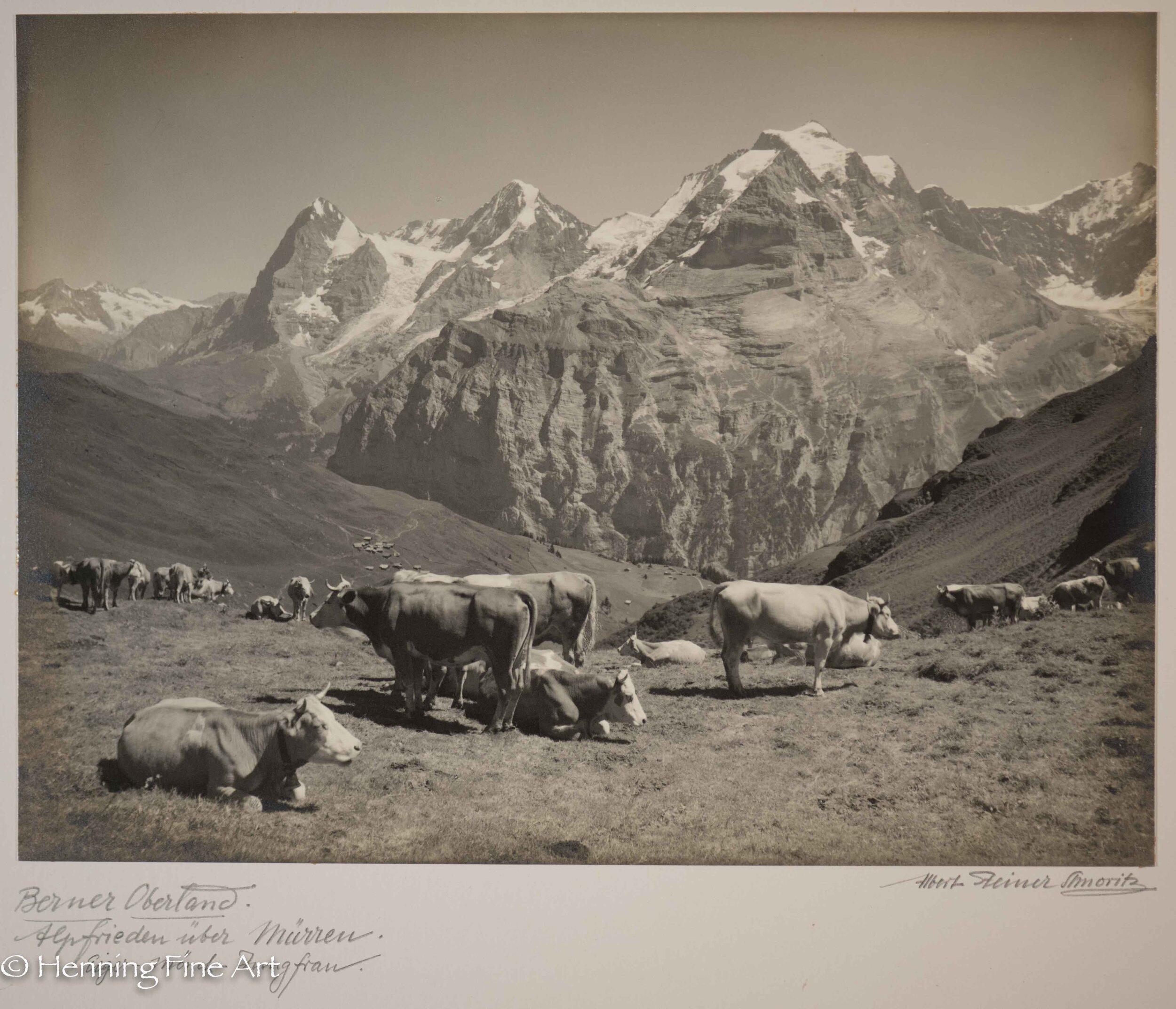"""Albert Steiner (1877 - 1965) """"Berner Oberland. Alpfrieden uber Murren. Eiger-Monch-Jungfrau.""""  Image (2-3)"""