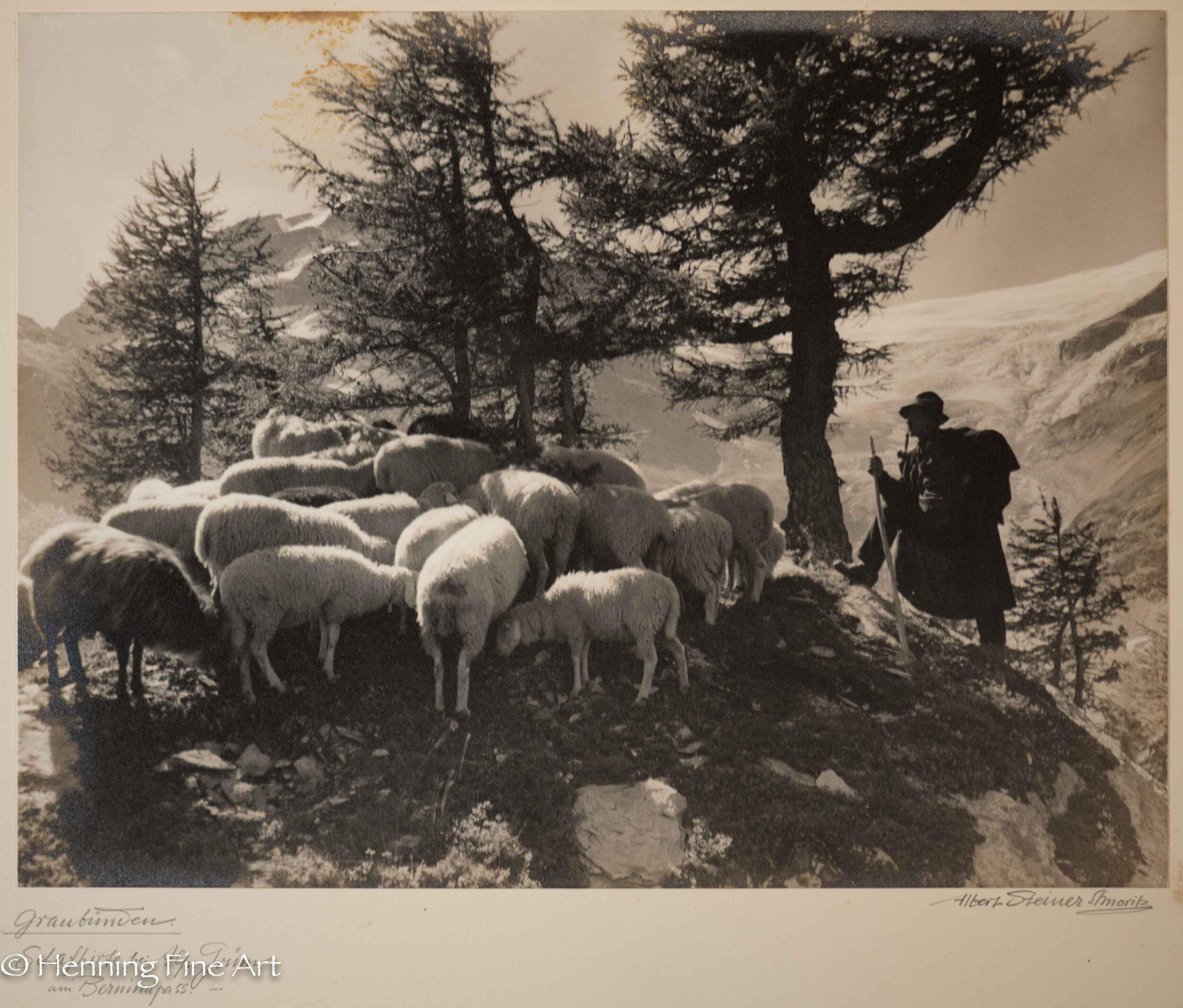 """Albert Steiner (1877 - 1965) """"Graubunden. Schafhirte bei Alp Grum am Berninapass.-""""  Image (6-2)"""