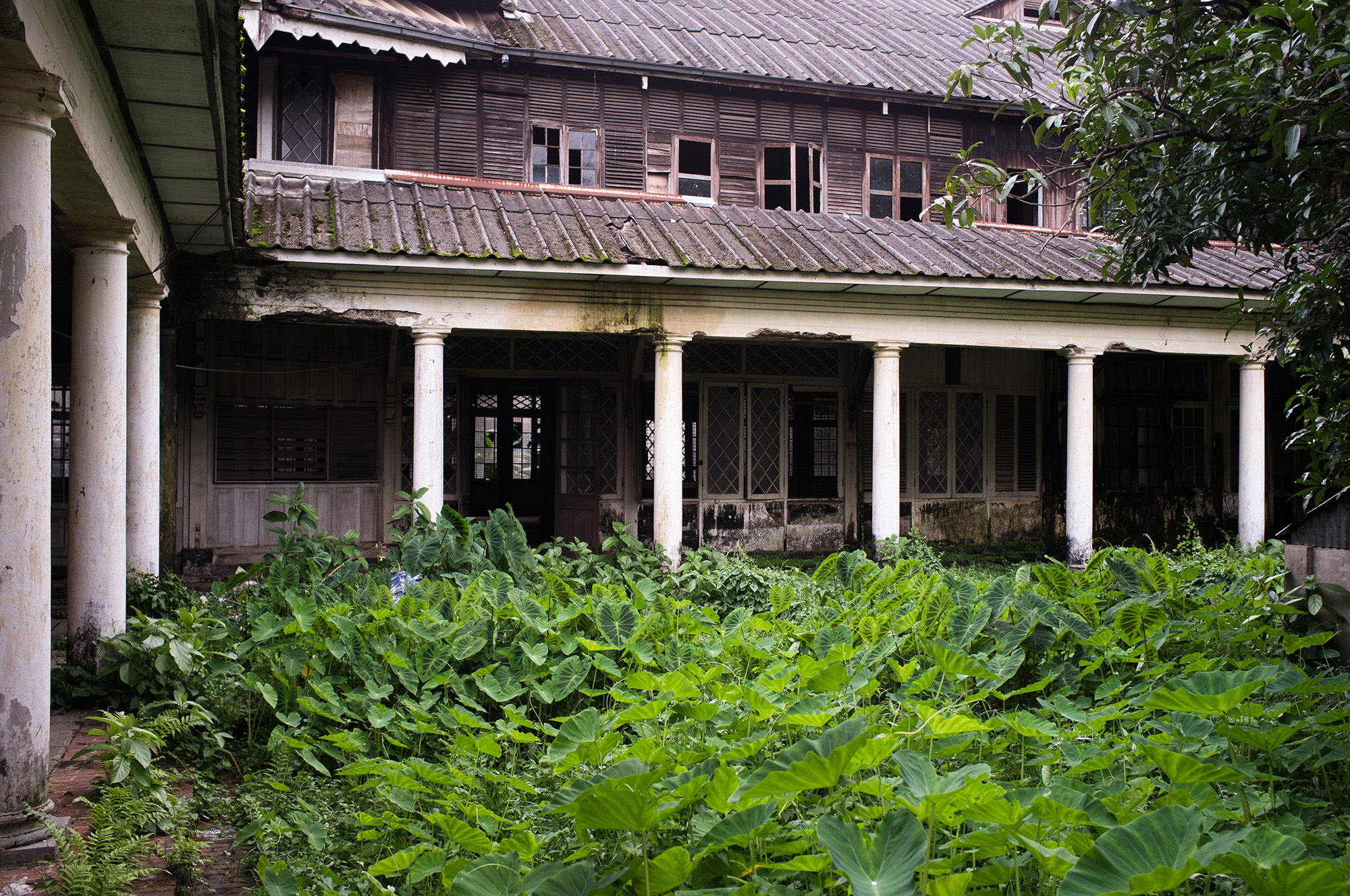 Overgrown courtyard.