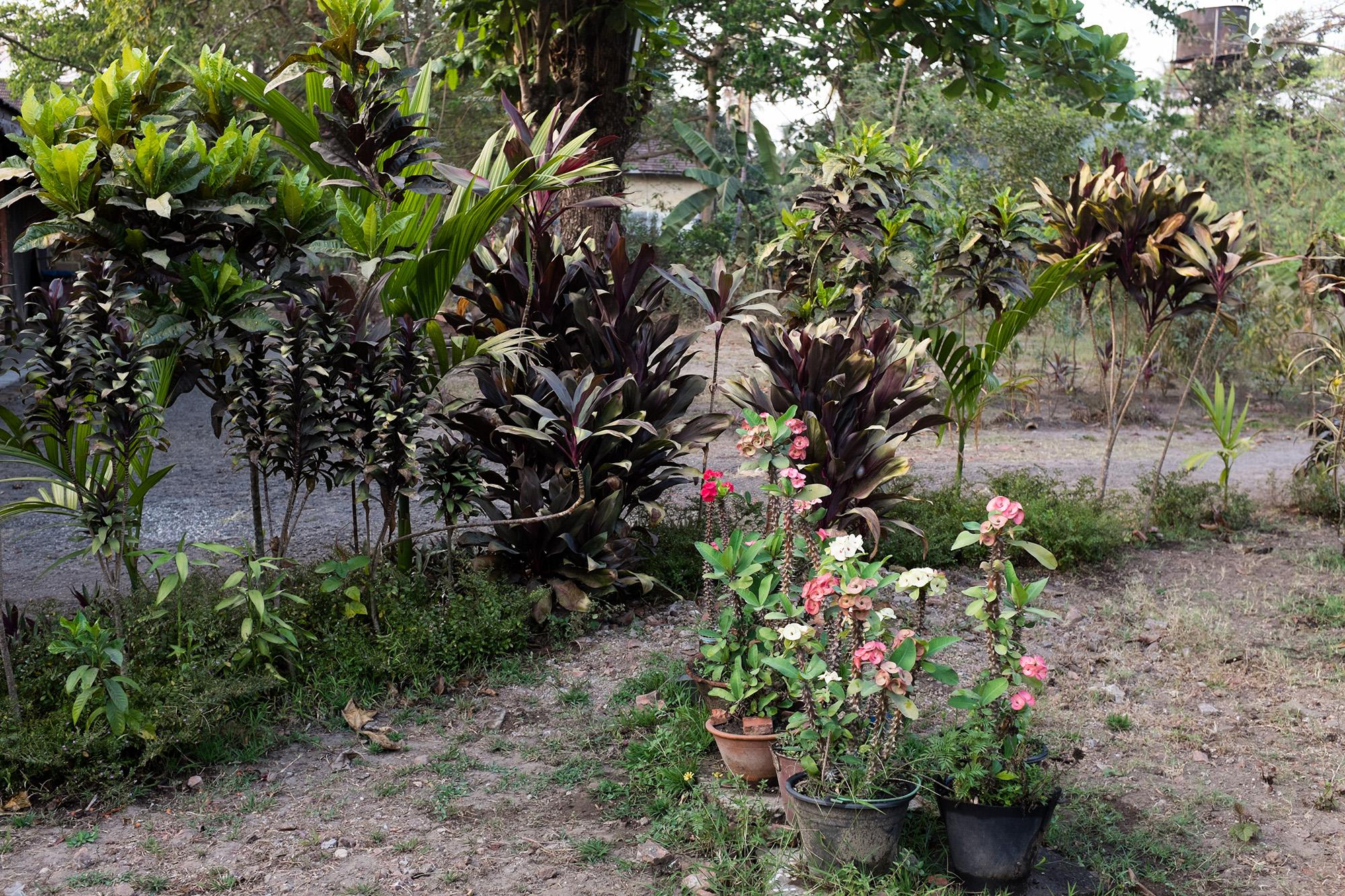 Family plants.