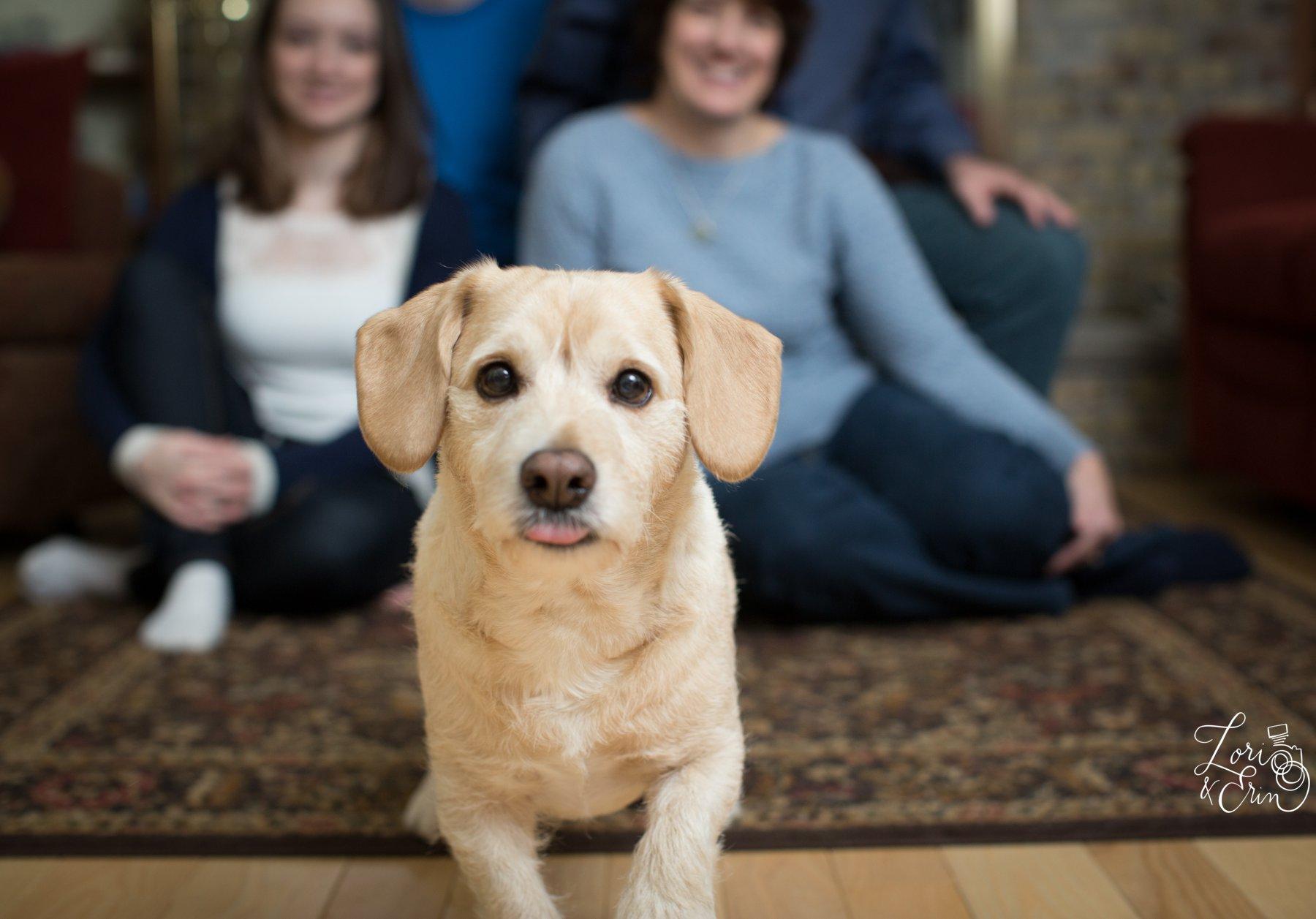 family portrait,penfield ny,