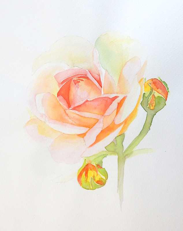 Submission-Kate-Tugwell-watercolour-rose-&-buds.jpg