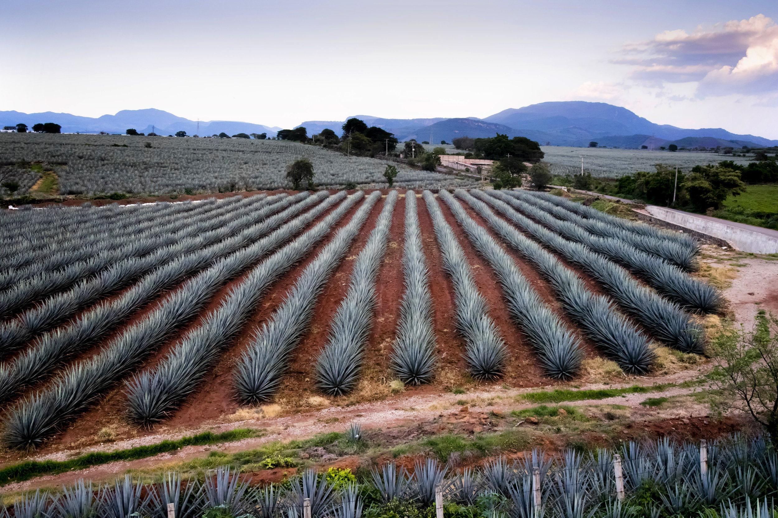 VincentIsore_Tequila002.JPG