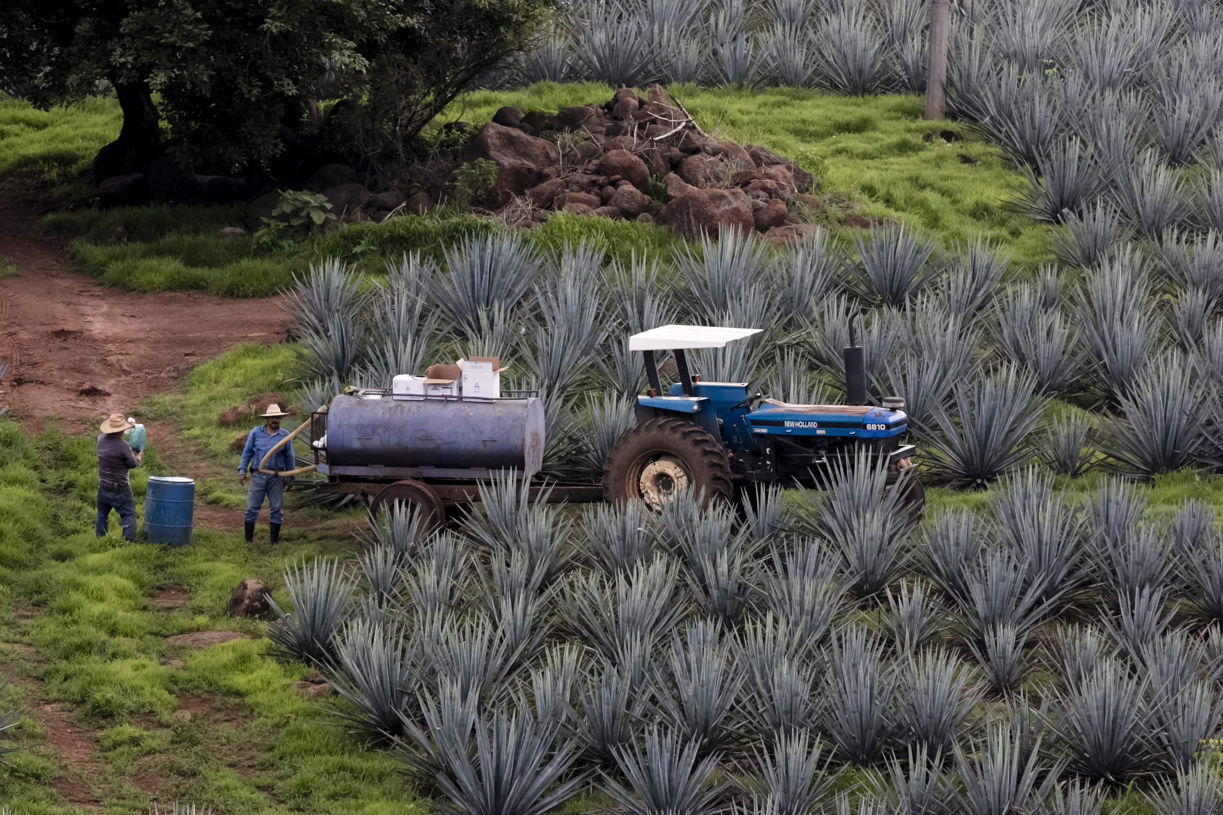 VincentIsore_Tequila009.JPG