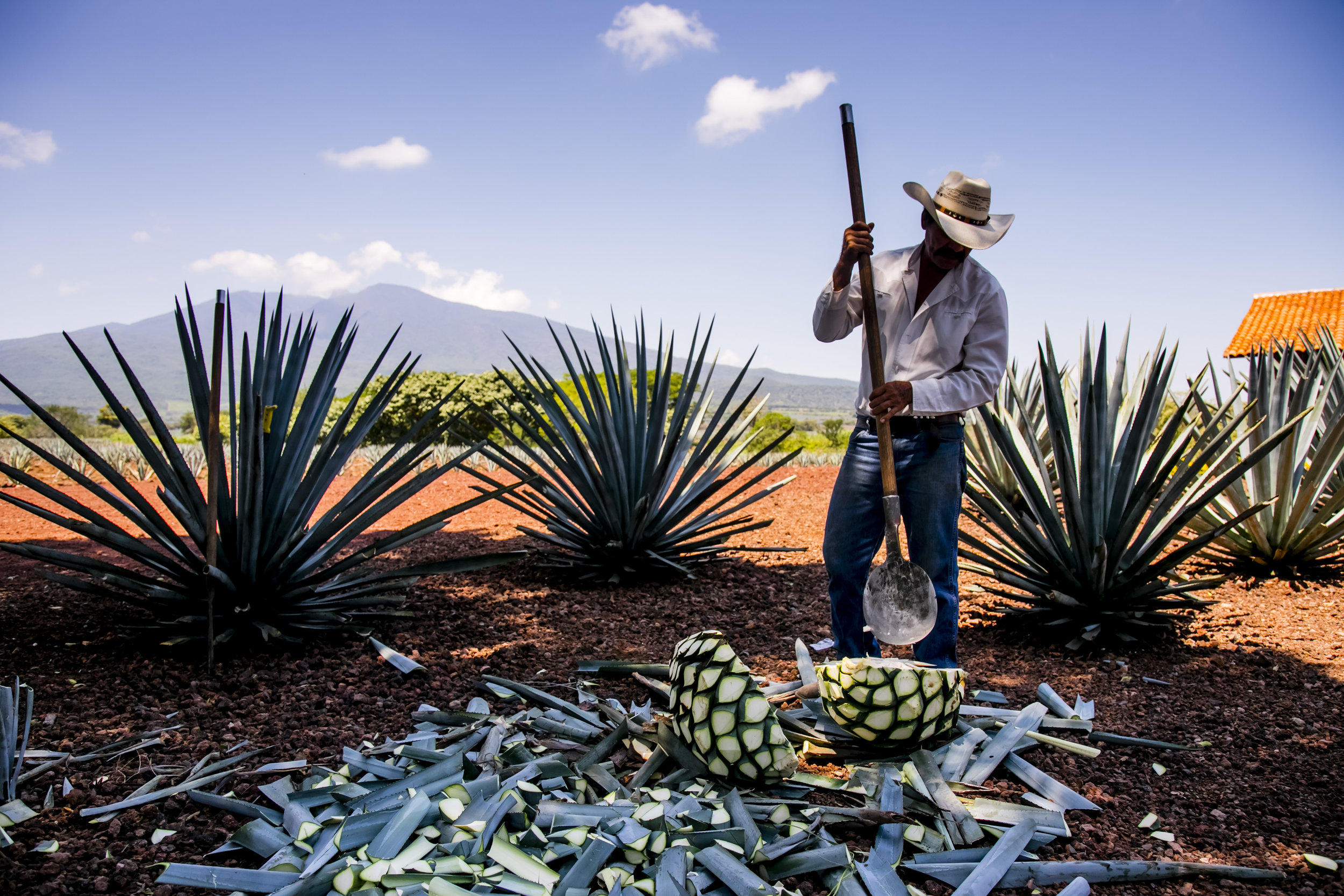 VincentIsore_Tequila014.JPG