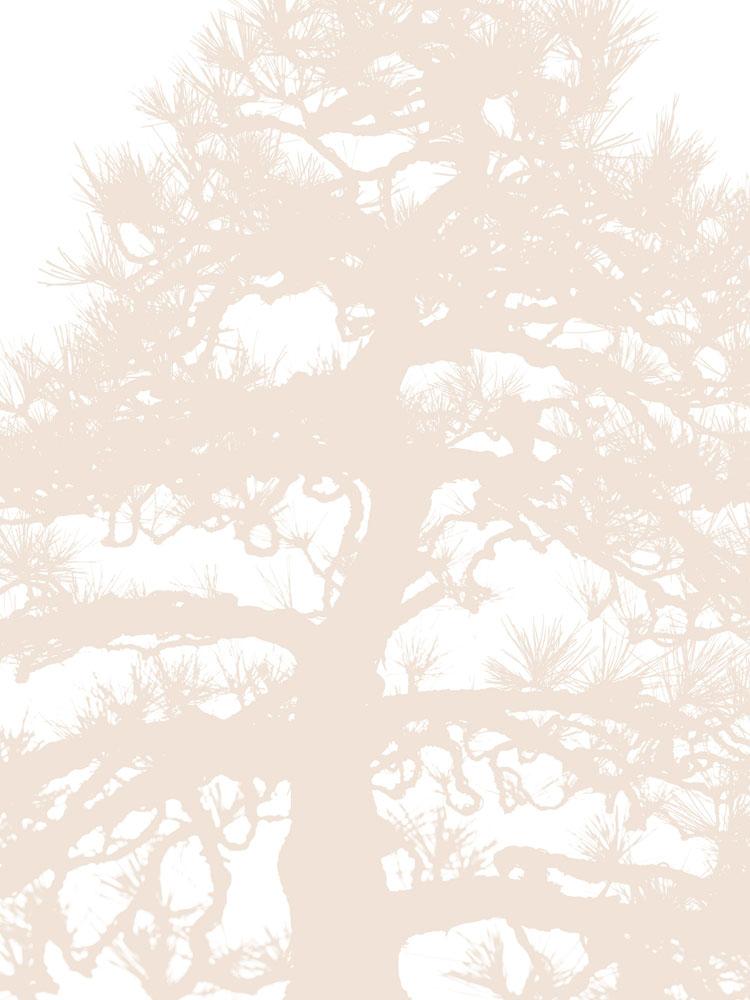 Bonsai 1 edit 2.jpg