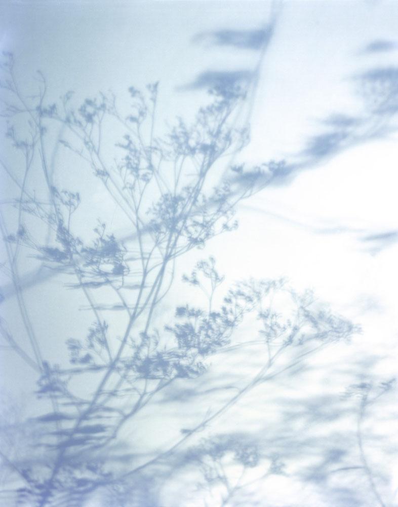 Shadows015.jpg