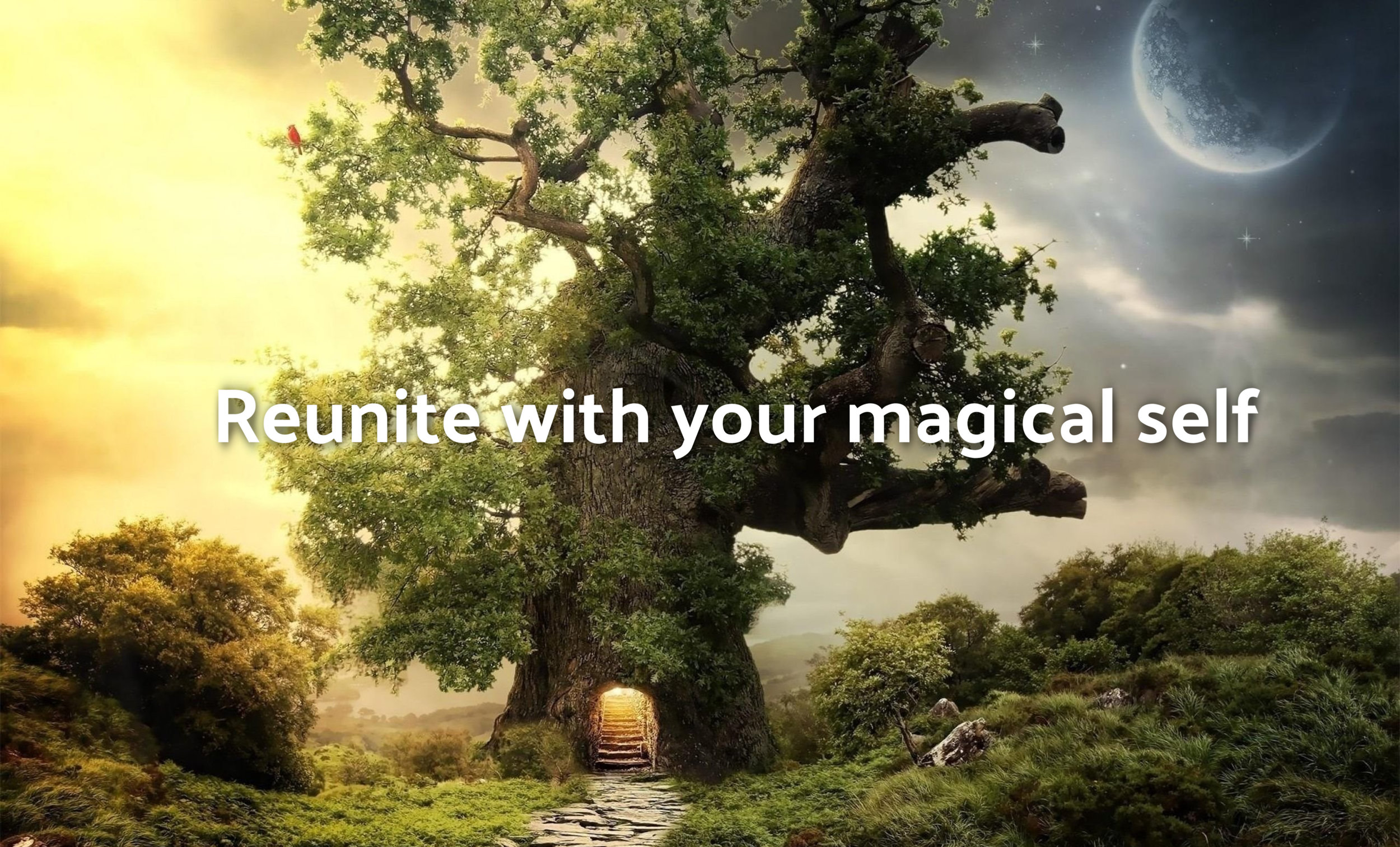 words-437865_fantasy-forest-hd-wallpapers-free-download-in-high-quality_2560x1600_h.jpg