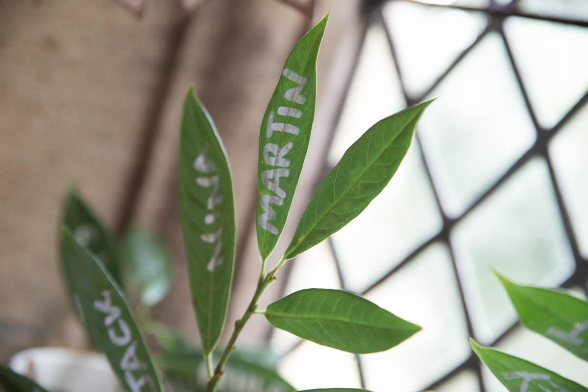 leaves (1 of 4).jpg
