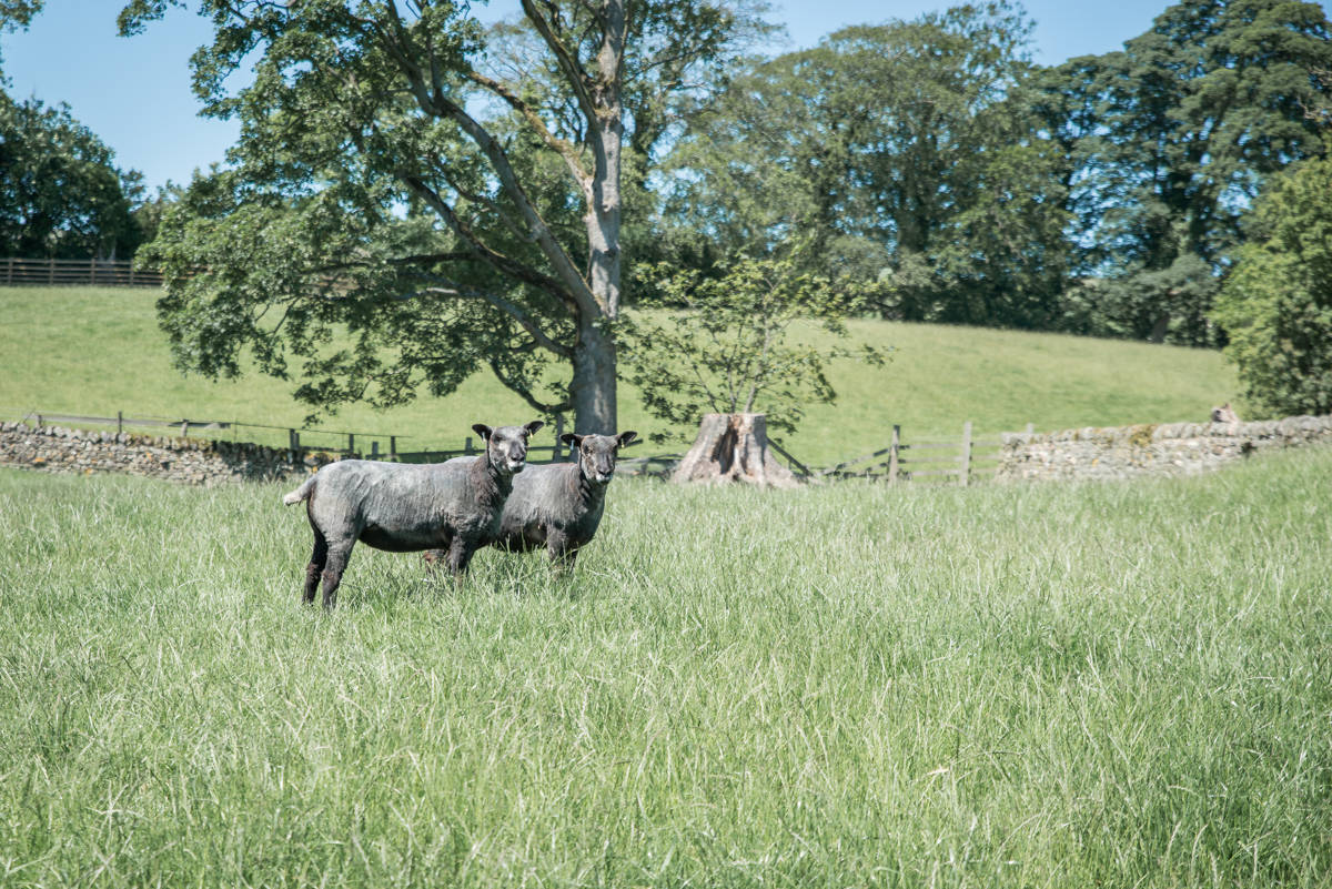 yorkshire farming photography - leeds wedding photographer (2 of 221).jpg